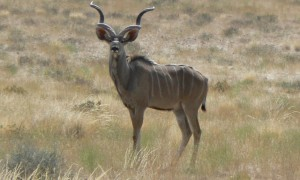 Namibia (Animals/Birds) 2012