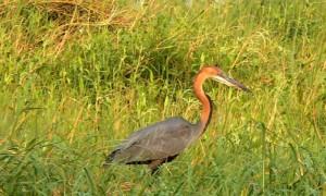 South Africa (Birds) 2009